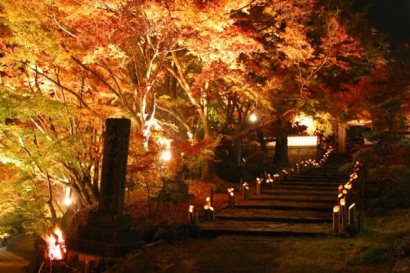 普現寺もみじライトアップの写真