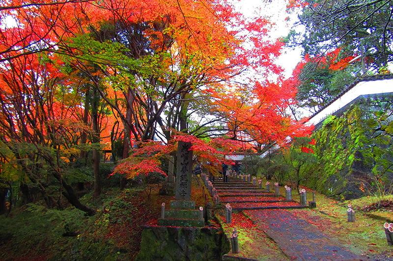 普現寺(紅葉)の写真