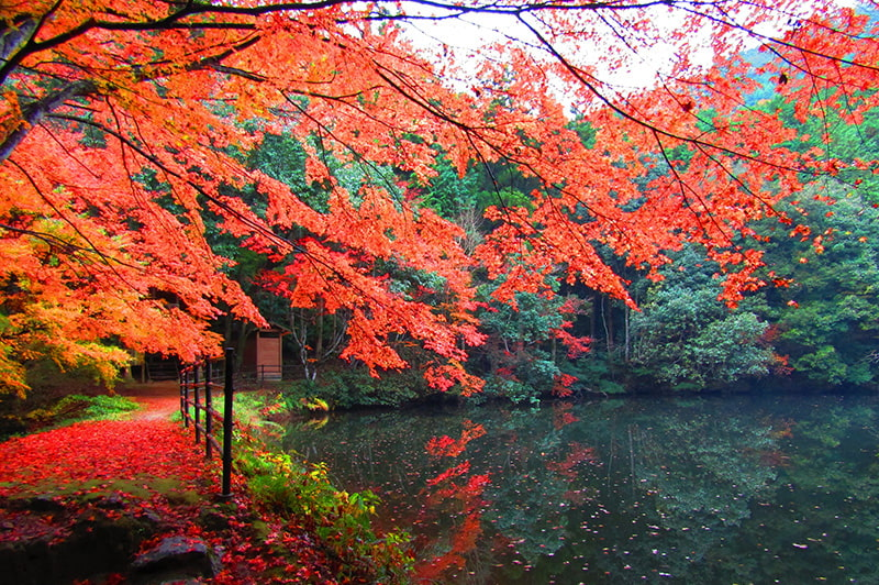 白馬渓(紅葉)の写真