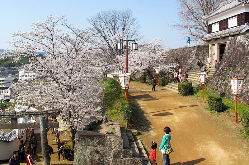 臼杵城址桜まつりの写真